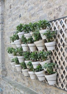 pots on trellis- for outside our family room window maybe?