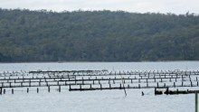 Oyster farms at St Helens on Tasmania's east coast Tasmania, East Coast, Oysters, Farms, Bring It On, Spaces, Homesteads