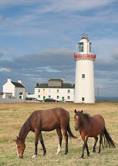 Horses at Loop Head Lighthouse, Look Head, County Clare, Ireland The Places Youll Go, Places To See, County Clare, Beacon Of Light, Ireland Travel, Dream Vacations, Costa, Beautiful Places, Around The Worlds
