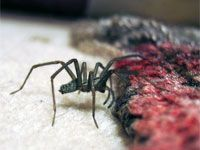 How to get rid of spiders in the house indoor pest control how to get rid of spiders in the house indoor pest control pinterest houses the ojays and spider ccuart Choice Image