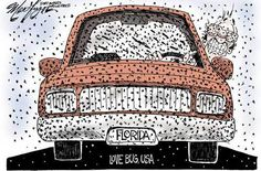 Just like Snowbirds and tourists, lovebugs invade Florida every summer from May until September.