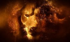 Check out this awesome collection of Narnia wallpapers, with 54 Narnia wallpaper pictures for your desktop, phone or tablet. Lion Hd Wallpaper, Free Desktop Wallpaper, Animal Wallpaper, Nature Wallpaper, Mobile Wallpaper, Desktop Wallpapers, Wallpaper Maker, Black Wallpaper, Wallpaper Downloads