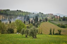 Perfectly cultivated lands, tall cypress trees, and farmhouses — this is Tuscany at its best.