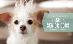 Susie's Senior Dogs: Support a Senior Basketball Senior Pictures, Country Senior Pictures, Senior Pictures Boys, Chihuahua Love, Healthy Dog Treats, Old Dogs, Dog Names, Dog Life, Best Dogs
