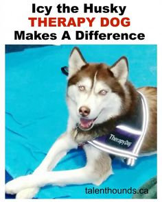 Find out how Icy the amazing husky therapy dog is making a difference in the lives of kids and adults through Pet Therapy Work- so Inspiring!