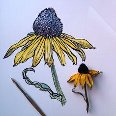 ∞Noel Badges Pugh∞ Flower Sketches, Art Sketches, Art Drawings, Flower Drawings, Drawing Art, Flower Pens, Flower Art, Pen And Watercolor, Floral Watercolor
