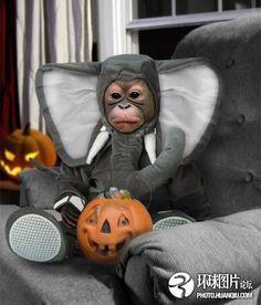 It's a monkey dressed up like an elephant . . . I repeat. . . a monkey dressed as an elephant!!!