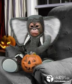 Is this a monkey dressed up like an elephant trick or treating