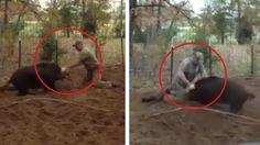 Dieses Video zeigt, weshalb man unter keinen Umständen einer Wildsau zu nahe kommen sollte!