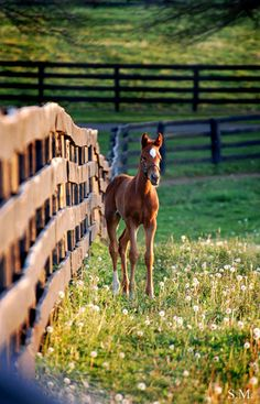 Foal, from Whimsical Raindrop Cottage