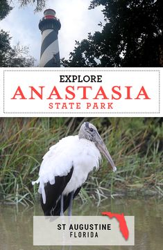 Visit the picturesque Anastasia State Park with its pristine beaches, historic St Augustine, lighthouse, and Places In Florida, Florida Vacation, Florida Travel, Florida Beaches, Travel Usa, Travel Tips, Anastasia, California Beach Camping, East Coast Road Trip