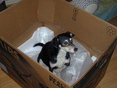14 Dogs Who Fell for the Cat Trap