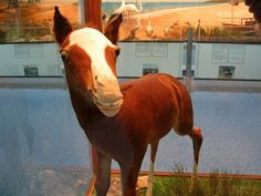 13 Examples Of Taxidermy Gone Terribly Wrong Bad Taxidermy, Childhood Toys, Happy Wednesday, Horses, Stuffed Animals, Derby, Funny, Photos, Pets
