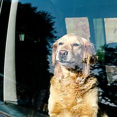 Is your dog at risk for heatstroke?