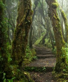 Mossy foggy forest. Old steps through the woods. I wonder where they lead.