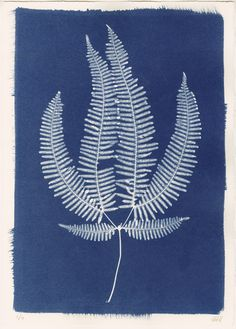 Sri Lankan Fern I Cyanotype by Henrietta Molinaro at Wilson Stephens & Jones http://www.wilsonstephensandjones.com