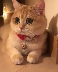 Omg those eyes funny cat quotes, pictures, videos - Katzen Bilder - Cute Baby Cats, Cute Cats And Kittens, Cute Funny Animals, Cute Baby Animals, I Love Cats, Kittens Cutest, Funny Dogs, Kitty Cats, Pet Cats