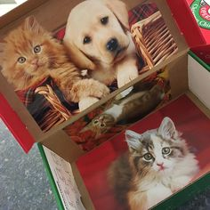 Shoebox decorated with calendar photos. This one will have puppy and kitty-themed items. Operation Christmas Child, Shoe Box, Kids Christmas, Charity, Kitty, Puppies, Children, Cats, Calendar