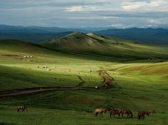 Horses, Mongolian Steppe.  Photograph by Mark Leong, National Geographic