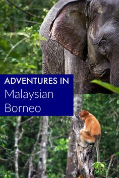Wild Adventures in Malaysian Borneo. Wildlife spotting in Borneo Borneo Travel, Malaysia Travel, Asia Travel, World Travel Guide, Top Travel Destinations, Places To Travel, Nightlife Travel, Vietnam, Thailand
