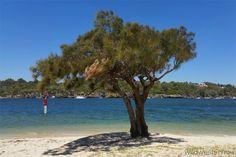 Perfect Picnic Spots in Perth | True Local Blog