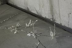 Katie Spragg's clay wildflowers grow through the cracks at London's Garden Museum - Crafts Council First Person Writing, Hope Symbol, London Garden, Card Sayings, Wild Strawberries, Royal College Of Art, Amazing Spaces, Art Installation, Wildflowers