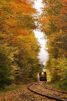 autumn train - very evocative.  I can just imagine the sound.....