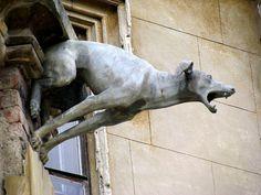 Dog gargoyle by susangottesfeld, via Flickr