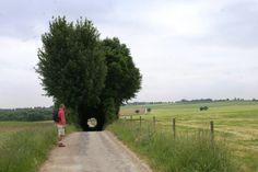 Wandelroute Groene wissel Houthem St.Gerlach 15km. Achteromsweg nabij Terblijt.