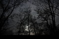 The haunted forest by Raluca-Suzana Buzoianu on Haunted Forest, Celestial, Explore, Sunset, Nature, Outdoor, Outdoors, Naturaleza, Sunsets