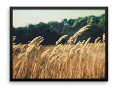 Wheat Fields Photography Print | Wall Art | Farm | Nature | Botanical Art | Cheap Art Prints | Large Wall Art | Farmhouse Decor | Country