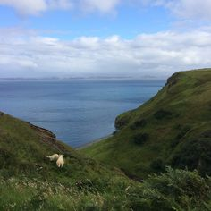 """mimipink17:  """"we went to a cliff in scotland with the oceans and hills and sheep, it was magical  """""""