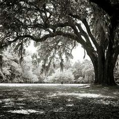 Black and white picture of an oak tree covered with moss