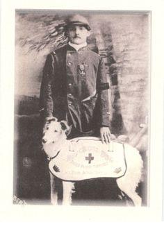 historic service dog - borzoi/collie type - <3