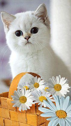 Котенок с ромашками, Фото животных