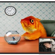 You cannot ask a fish not to swim  It's the only thing that makes him him ~ Tony Curtis