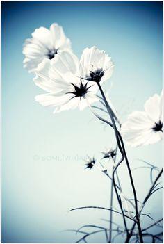 Flowered Conversation by Hantenshi on @DeviantArt