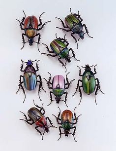 multicolored beetles Glass?