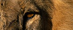 African Safaris with Eyes on Africa