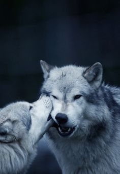 johnnybravo20: Kiss of a Wolf (by Beate Schwarzmann-Rentzschke)