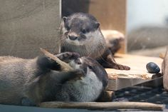 Are You Seriously Going to Chew on That? Via Beginners Blog Otter