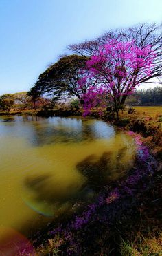 Things I Love About: Lal Bagh , Bangalore , India