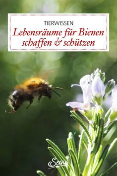 Helfen wir gemeinsam mit mehr Lebensraum für unsere Bienen zu schaffen und legen kleine Bienenwiesen im Garten an. Warum das so wichtig ist, lesen Sie hier. Running Away, Animales