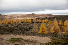 autumnimpression - nordic landscape in autumn near the myvatnlake in the north of iceland. Iceland, Autumn, Mountains, Landscape, Nature, Travel, Ice Land, Fall, Naturaleza