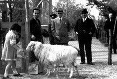 ✿ ❤ Atatürk orman çiftliğinde Kurban Bayramı sabahı...