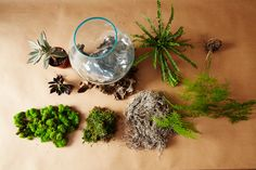 Learn how to make your own unique terrarium!