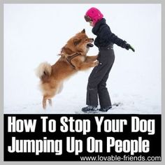An Kety Pet Care. Get Your Dog Trained Today With These Simple Tips. Training your dog is important for an obedient relationship between you and your canine friend. During the training process, you and your dog will experien Animals And Pets, Cute Animals, Education Canine, Yorky, Training Your Dog, Leash Training, Training Tips, Potty Training, Dog Hacks
