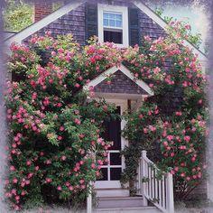 Nantucket Cottage, Nantucket Island, Coastal Cottage, Landscape Curbing, Climbing Flowers, Flowering Vines, Rose Cottage, Garden Inspiration, Beautiful Gardens