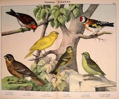 010-Natural history of the animal kingdom for the use of young people..- 1889-William Forsell Kirby | by ayacata7