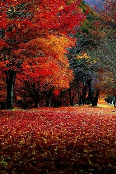 A splendid Autumn scene.
